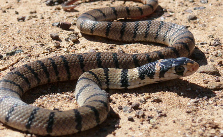 помощь при укусе змеи