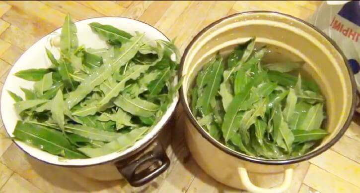 обработка листьев иван-чая