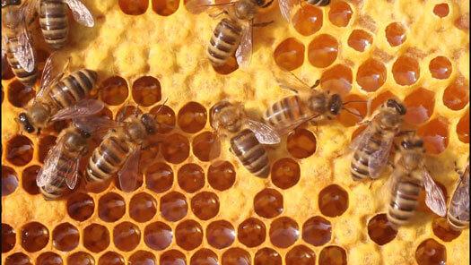 мед здоровье и красота