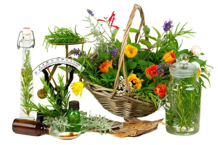 лечение остеохондроза лекарственными растениями