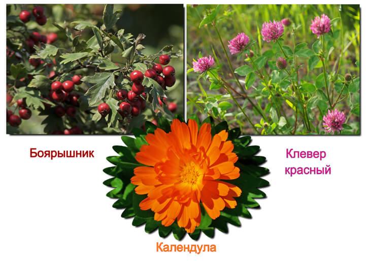растения для настойки от давления