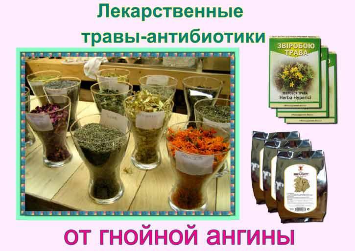 лекарственные травы-антибиотики от гнойной ангины