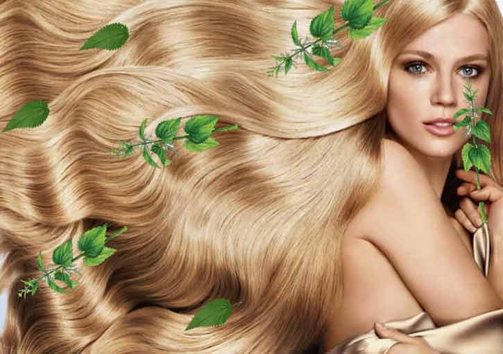 лечение волос крапивой рецепты
